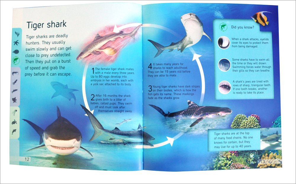 product life cycle of ocean park Animal classification zalophus californianus description california sea lions are known for their intelligence, playfulness, and noisy barking their color ranges from chocolate brown in males to a lighter, golden brown in females.