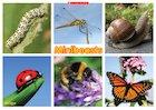 Minibeasts – minibeasts poster