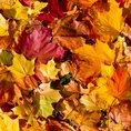 Autumn poems and activities
