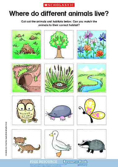 Where do different animals live? u2013 FREE Primary KS1 ...