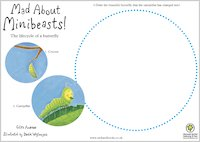 Mad About Minibeasts Draw a Butterfly
