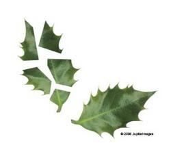 Exploding leaf