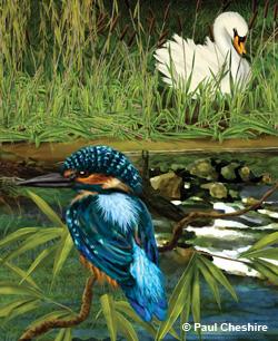 Riverbank illustration