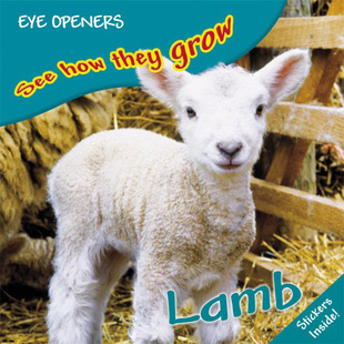 See How They Grow: Lamb