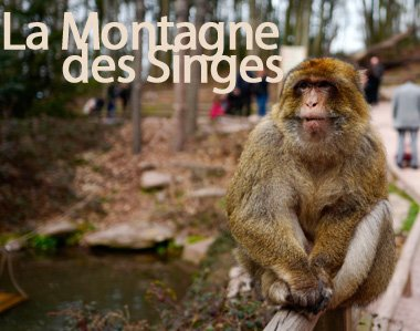 La Montagne des Singes (menu)