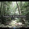 Rainforests video