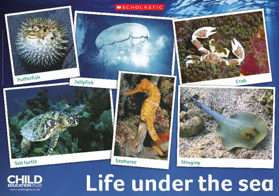 Life under the sea - poster