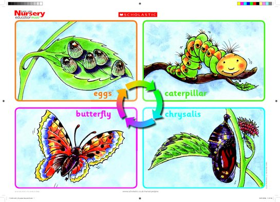 Life cycle of a butterfly - poster