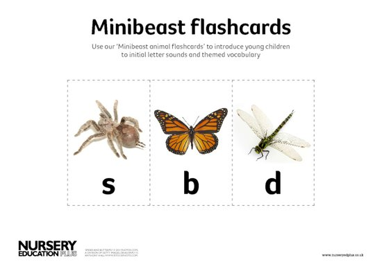 Minibeast flashcards
