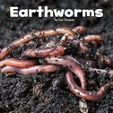 Little Creatures: Earthworms
