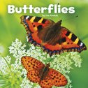 Little Creatures: Butterflies