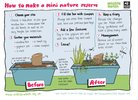 How to make a mini nature reserve