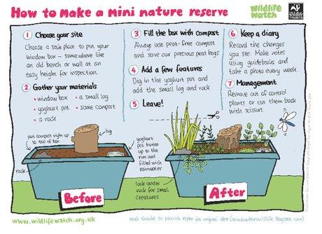 How to make a mini nature reserve