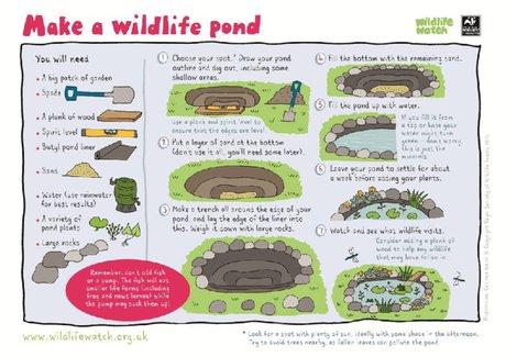 Make a wildlife pond