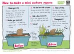 How to make a mini nature reserve (1 page)