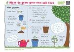 Oak tree (1 page)