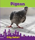 City Safari: Pigeon