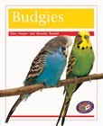 PM Orange: Budgies (PM Non-fiction) Levels 15, 16 x 6