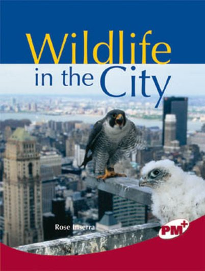 PM Ruby: Wildlife in the City (PM Plus Non-fiction) Levels 27, 28 x 6