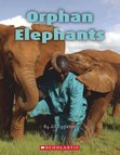 Connectors Orange: Orphan Elephants x 6