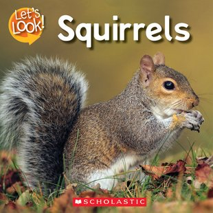 Let's Look! Squirrels
