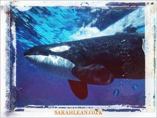 Forever Whale wallpaper