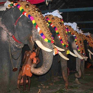 Pooram elephants