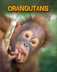 Living in the Wild: Primates - Orangutans