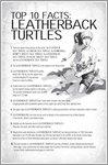 Shark Adventure: Leatherback Turtle Facts