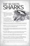 Shark Adventure: Top Ten Shark Facts