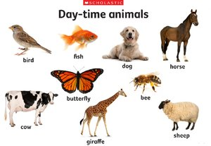 Day-time animals