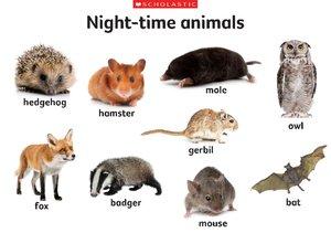 Night-time animals