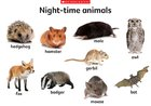 Night-time animals