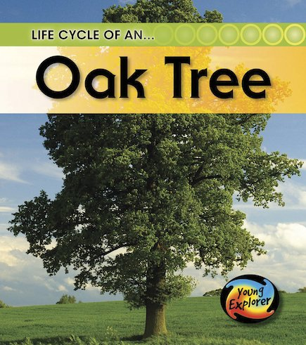 Young Explorer: Life Cycle of an Oak Tree