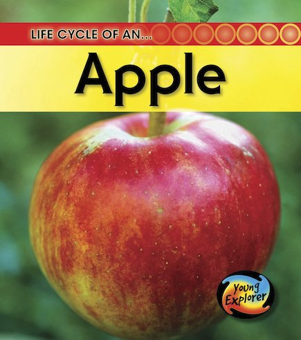 Young Explorer: Life Cycle of an Apple