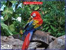 Peru rainforest – photo slideshow