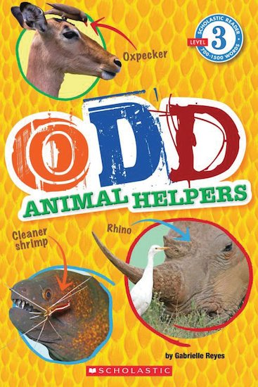 Odd Animal Helpers (Level 3)