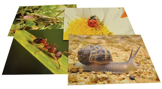 Nature's Mini-Beasts Paper