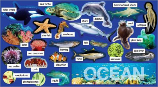 Ocean Plants & Animals Mini Bulletin Board