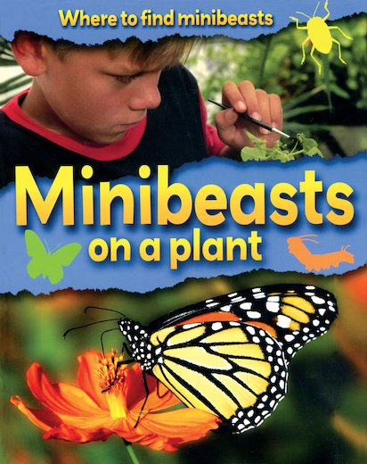 Where to Find Minibeasts: Minibeasts on a Plant