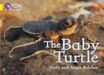 The Baby Turtle (Yellow Band 3)