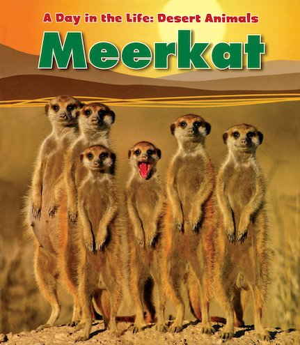 A Day in the Life: Desert Animals: Meerkat
