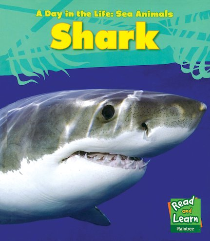 A Day in the Life: Sea Animals: Shark