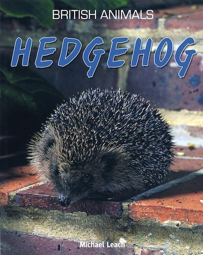 British Animals: Hedgehog
