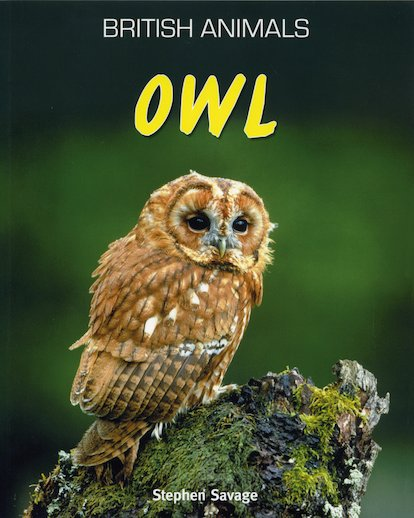 British Animals: Owl