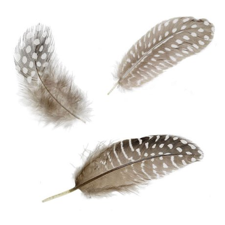 Selection of feathers