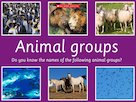 Animal groups – image slideshow