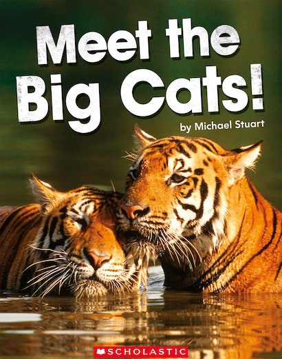 Meet the Big Cats!