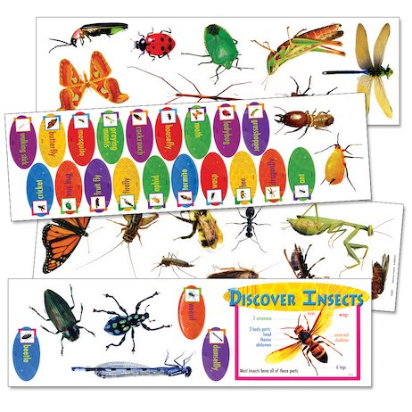 Discover Insects Bulletin Board Set