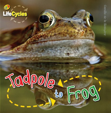 QED Lifecycles: Tadpole to Frog